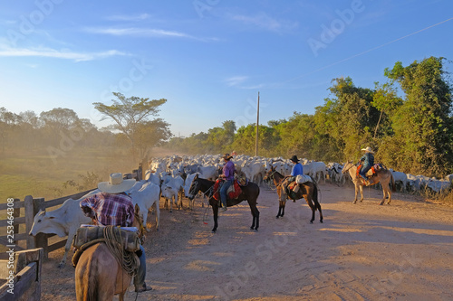 Fotografija  Unrecognizable cowboys at a farm along the Transpantaneira road in the Pantanal,