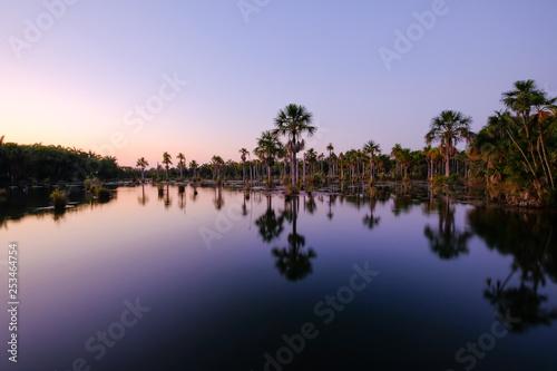 Fotografija  Reflection of the palm trees in the lagoon Lagoa das Araras at sunrise, Bom Jard