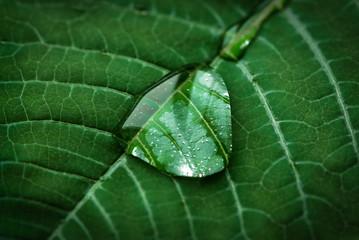 Makro- rosy kropla na zielonym liścia tle. Piękna natura w prostocie.