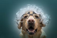 Un Perro Con Gafas Y Peluca