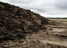 Steaming Pile Of Manure On Farm Field In Dutch Countryside