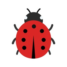 Illustration Lady Bug  Icon
