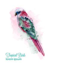 Tropic Colorful Parrot Bird Vector Watercolor. Cute Bird Illustration. Blue Colors Splashs