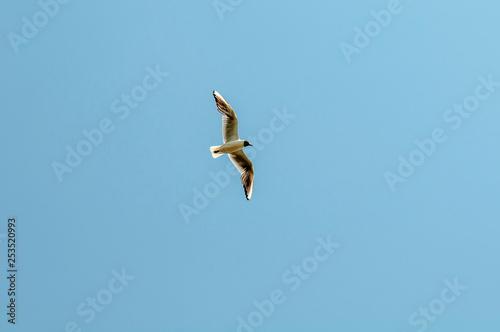 Fotografía  ptak w locie