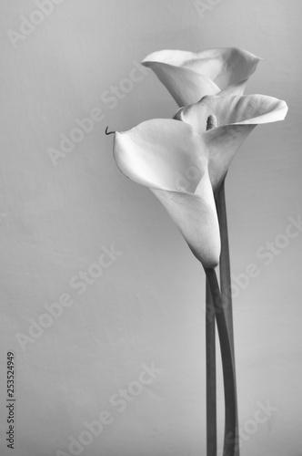Leinwand Poster Monochrome calla lilies
