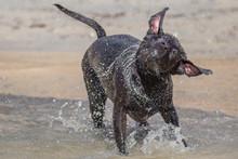 Pies Dog W Wodziezabawa