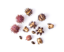 Castor Oil Seeds Isolated On White Background. Top View
