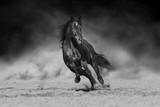 Czarny ogier biegający po pustynnym pyle na tle dramatycznego. Czarny i biały - 253565398
