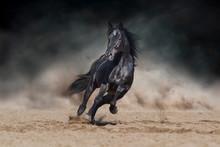 Black Stallion Run On Desert D...