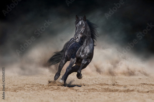 Leinwand Poster Black stallion run on desert dust against dramatic background