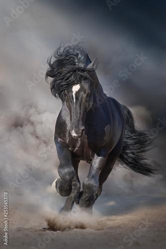 Fototapeta Black stallion run on desert dust against dramatic background obraz