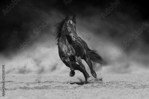Foto op Canvas Paarden Black stallion run on desert dust against dramatic background. Black and white