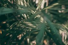 Blurred Tropical Green Leaf Background, Dark Tone Theme.