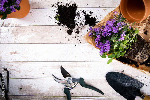 Fototapeta Sadzonka, wiosenne kwiatki. obraz