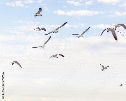 Photo Stands Bird Bird flying high in sky
