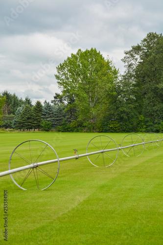 Fotografie, Obraz  English lawn growing on a farm