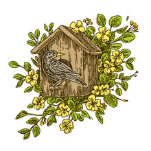 The Birdhouse With Starlingw In The Flowering Branches. Color. Engraving Style. Vector Illustration.