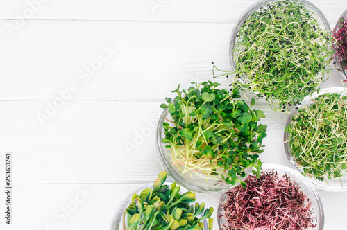 Micro greens of radish, amaranth, mustard, beetroot and onion in glass bowls Canvas Print