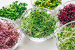 canvas print picture - Micro greens sprouts of onion and other sprouts in glass bowls
