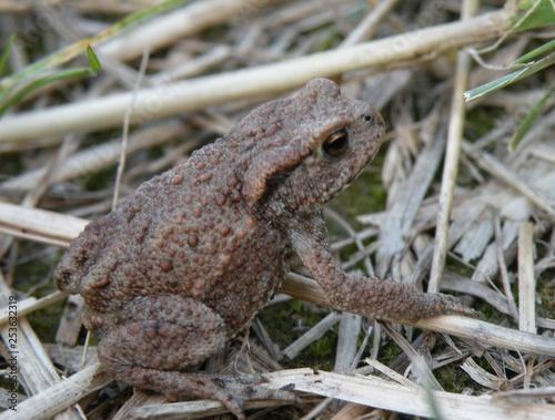 Photo żaba