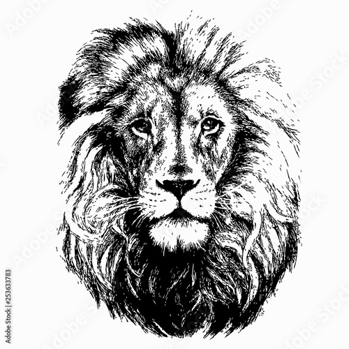 Photo sur Toile Croquis dessinés à la main des animaux Lion head vector illustration on white background