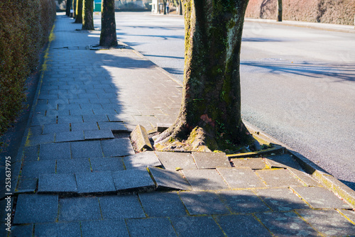 Photo 木の根と歩道の損傷