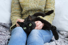 Black Cat Lies In The Hands Of The Girl. At Home On Sofa.