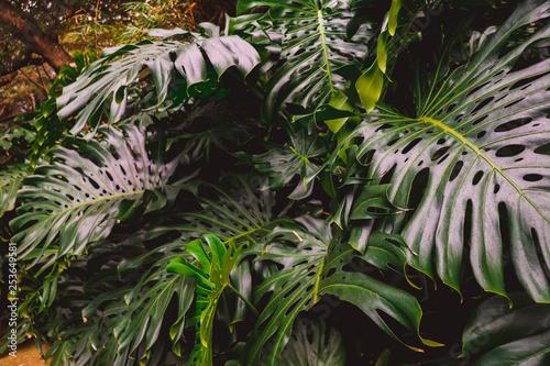 Fotobehang Natuur green fern in the forest