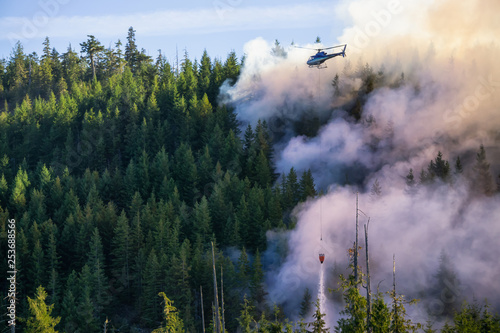 Fotografiet  Helicopter fighting BC forest fires during a hot sunny summer day