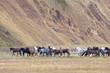 auf nach Hause, Islandpferde mit Reitern, Landmannalaugar, Island