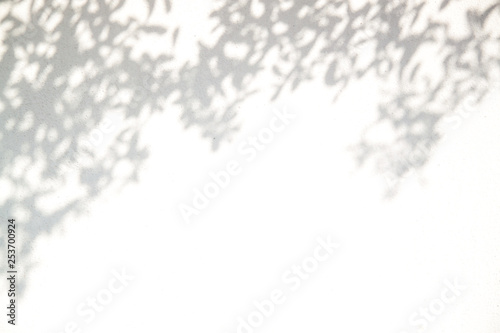 Fototapety, obrazy: Interesting abstract background of exotic shadow  leaves on a white wall.