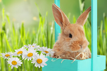 Decorative Basket With Adorable Furry Easter Bunny In Green Grass, Space For Text