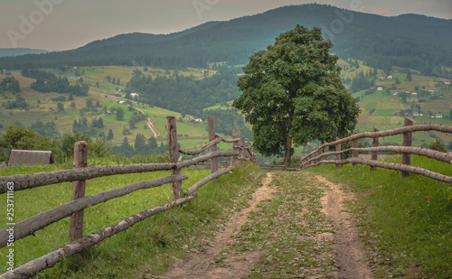 Tuinposter Wijngaard Summer in the Carpathians