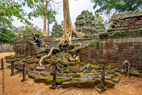 Photo  Ta Prohm Temple, Cambodia: Tree grown into building