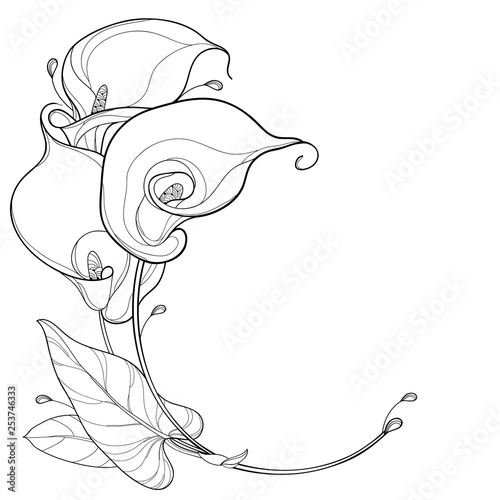 Round bouquet of outline Calla lily flower or Zantedeschia with ornate leaf in black isolated on white background Wallpaper Mural
