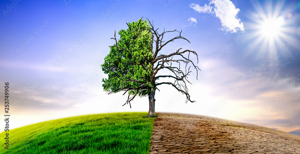 Fototapeta Climate change withered tree and dry earth.