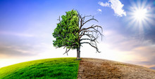 Climate Change Withered Tree A...