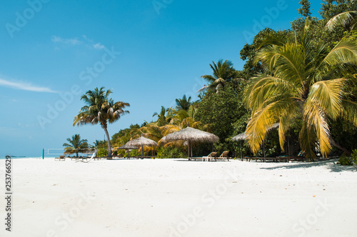 Fotografia, Obraz Tropical paradise white sand beach with palms at Maldives south ari atoll laccad