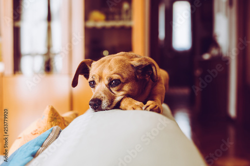 Foto  little mongrel dog pet - sensory connection with animals concept - trendy style