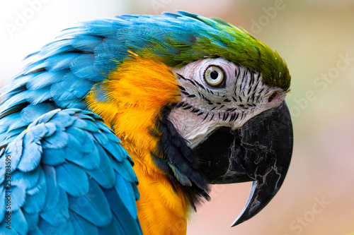 Fotografie, Obraz Parrot / Macaw Close Up