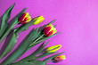 canvas print picture - Fresh cut tulips on a pink background with yellow red