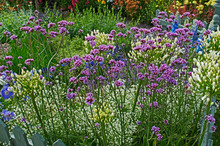 A Cottage Garden With Colourfu...