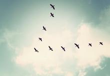Flock Of Birds Flying In The Sky,Vintage Tone