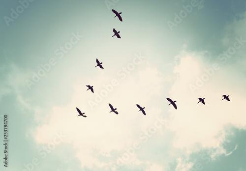 Obraz Flock of birds flying in the sky,Vintage tone - fototapety do salonu