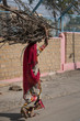 Woman carrying bundle of firewood on her head, Kishan Ghat, Jaisalmer, Rajasthan, India