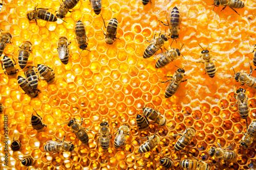 Recess Fitting Bee Working bees on honeycomb