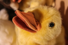 Quack Quack - Fuzzy Fluffy Stuffed Yellow Duck Toy - Closeup Of Face And Bill And Selective Focus