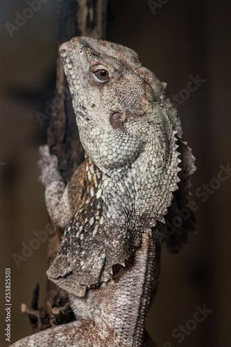 Photo  lizard on a branch
