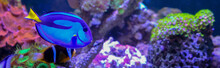Amazing Coral Reef Aquarium Wi...