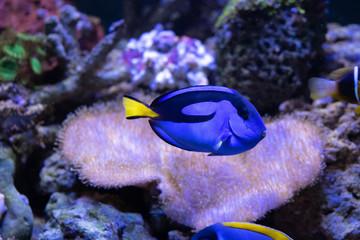 niesamowite akwarium z rafą koralową z niesamowitymi tropikalnymi rybami